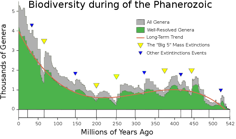 Biodiversity decline over ages